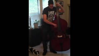 test romanian doublebass zyex medium gauge strings