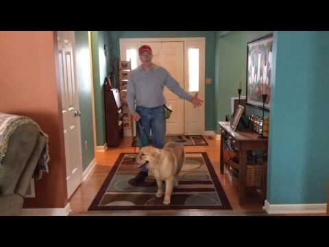 Putting the Dog's Jump on Command