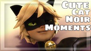 CUTE CAT NOIR MOMENTS I Miraculous Ladybug I