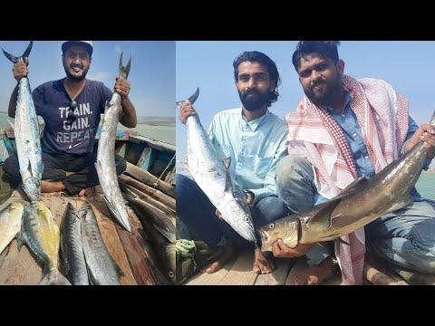 Barracuda Cobia & Mackerel fishing in Arabian sea 2021 | Karachi Fishing 2021 | charna fishing 2021