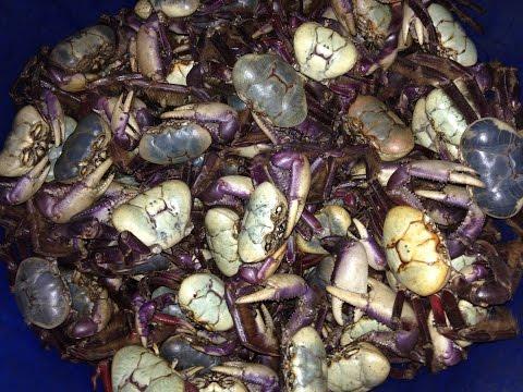 Crab Season 2016