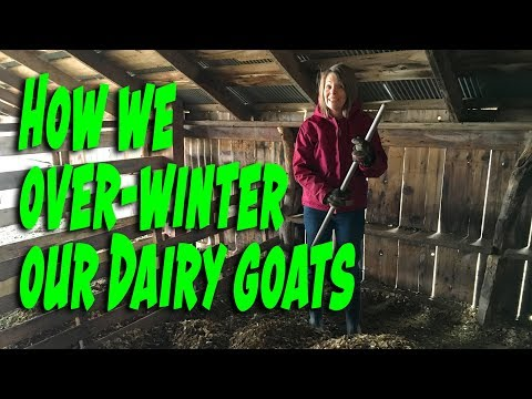 How We Over-winter Our Dairy Goats