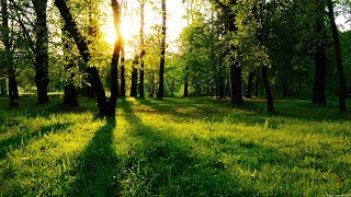 Заброшенный лес-1