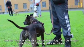 Gevangenen trainen asielhonden