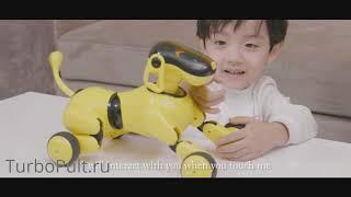Собака робот щенок Дружок управление на русском языке