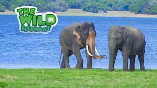 Sri Lanka's wild elephant: a journey for survival