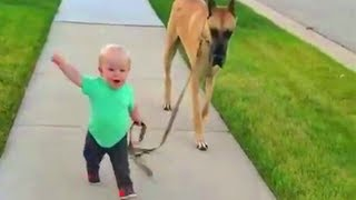 The Baby is the Leader of the Dog 👶🐕 FUNNY Dog and Baby Walking Together