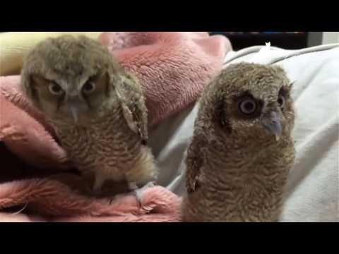 Смешные птицы (32 фото) - Приколы