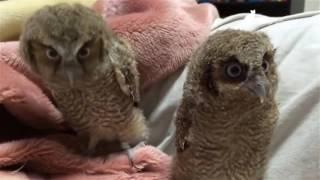 Забавные птицы. Смешные и веселые птицы. Funny birds compilation. Funny Animals