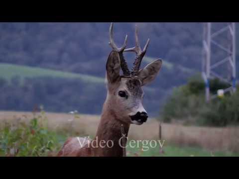 Čergovský kapitální - video Čergov