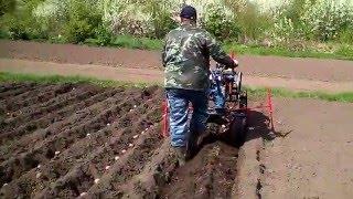 посадка картофеля под окучник мотоблоком. ч-2