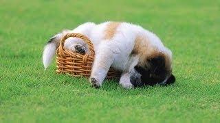 動物 おもしろ_HD, #動物 おもしろ 映像, , #動物 おもしろ 犬, , #動物...