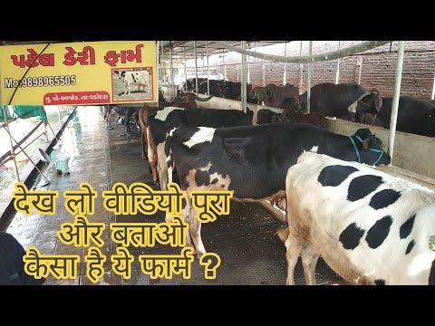 Patel Dairy Farm Vadodara Gujrat