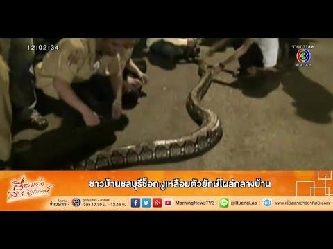 เรื่องเล่าเสาร์-อาทิตย์ ชาวบ้านชลบุรีช็อก งูเหลือมตัวยักษ์โผล่กลางบ้าน (15ก.พ.58)