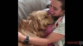The best funny animals video compilation of 2019