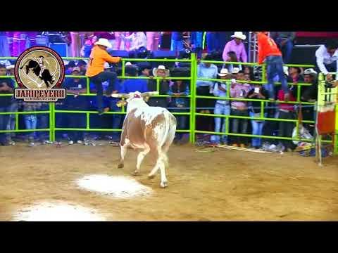 Ordeñando La Vaca -marco Flores Y La Jerez