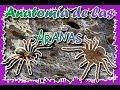 Anatomía de las arañas  Queda impresionado con su interior  (Anatomía)  4Dmaster 
