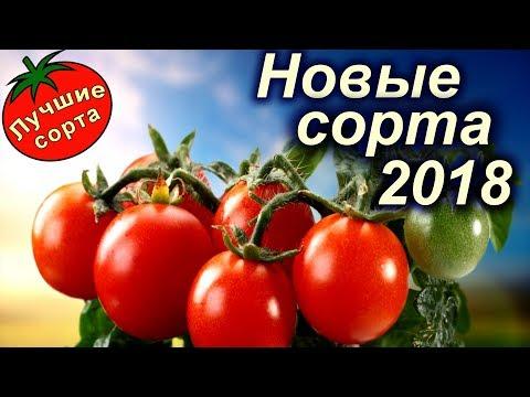 Купить семена томатов 2018 почтой в Украине (лучшие сорта томатов)