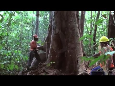 Deforestation in the Amazon Basin, Is It Too Late? [IGEO.TV]