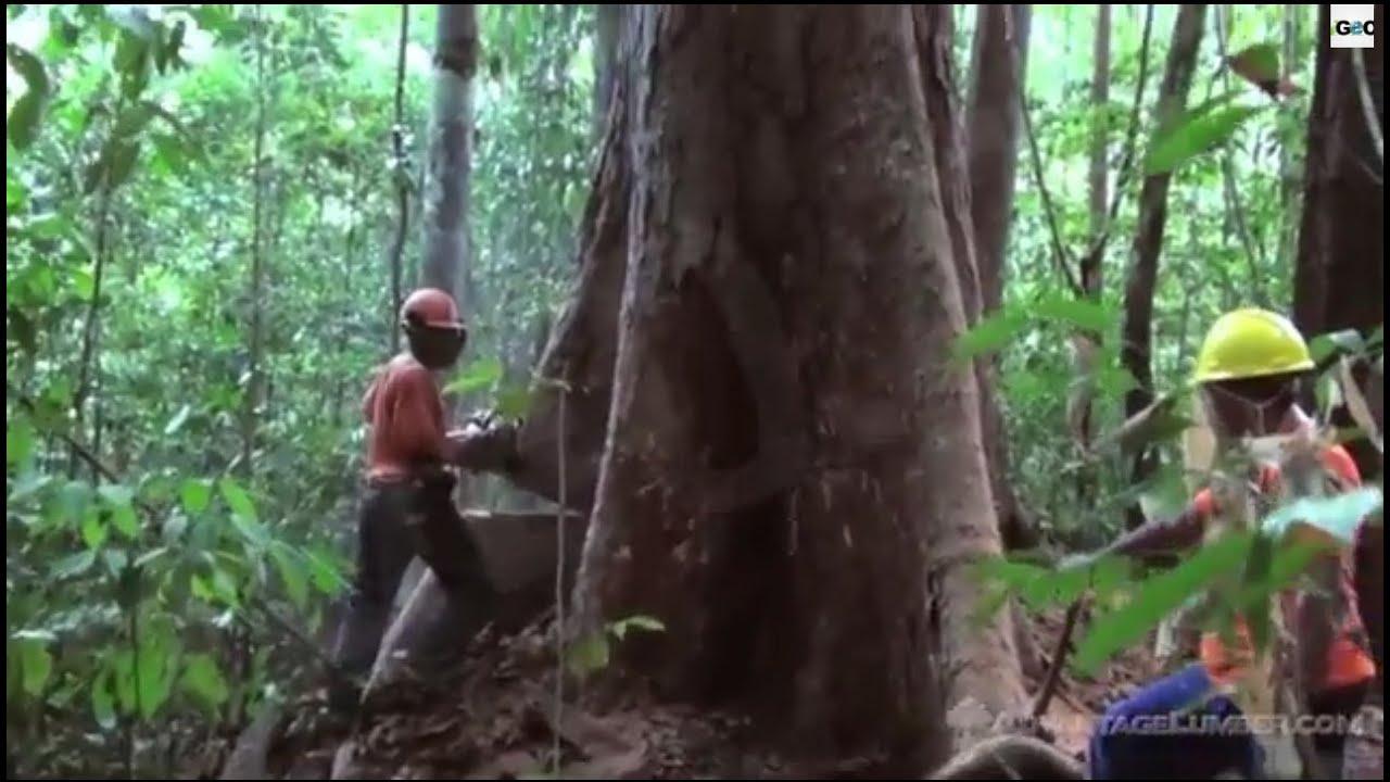 Amazon Basin Images