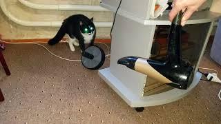 Кошка и фен
