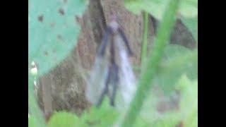 В Лесу Азербайджана обнаружен Фея попавшая в паутину. неизвестные существа. странное существо