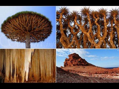 On The Spot - Mysteri Series Pulau Socotra (Tempat Dajjal Di Kurung) part1