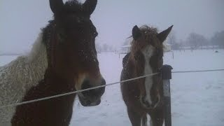 In Pursuit of Happiness:  Working on a Horse Farm in Winter
