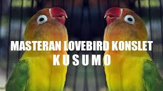 Download Mp3 Masteran Asli Suara Lovebird Kusumo Jeda 3 Detik