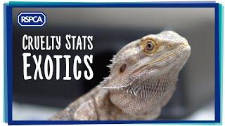 Exotic Pet Statistics