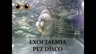 Ojo hinchados pez grande