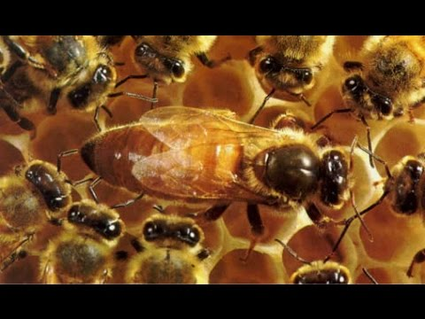 Календарь пчеловода на 2017 год по Цебро