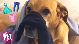 Pupper Helps Human with Laundry 🐶👕 | Funny Pet Compilation