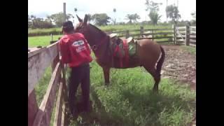 Montando nos burros que pulam ADB