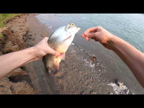 NSR Fishing - Goldeye And Walleye