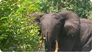 INCREDIBLE Wildlife #WIN | Jet Skiers See Bull Elephant