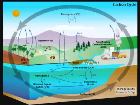 The Carbon Cycle SCIENCE PROJECT 10 1 YouTube