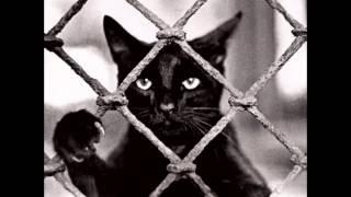 черные коты-прекрасны