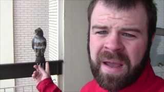 Plastic Owl vs Pigeon - Update