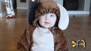 CUTEST PUPPY! - CHASE'S HALLOWEEN COSTUME