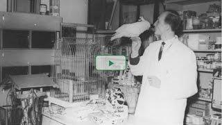 JBL GmbH & Co. KG - L'avancée par la recherche