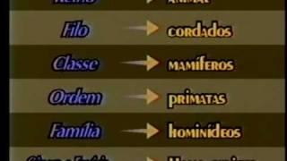 CLASSIFICAO DOS SERES VIVOS biologia
