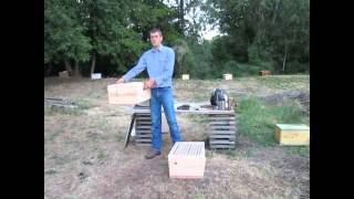 Beekeeping, Making splits