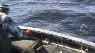 COMMERCIAL FISHING TROLLING FOR KING SALMON IN SITKA ALASKA