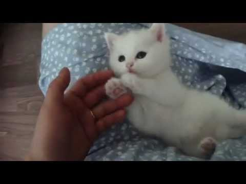 Super cute kitten - YouTube