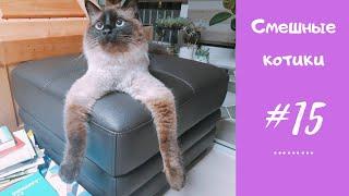 Смешные КОТЫ, КОТИКИ, КОТЯТА #15 Приколы с котиками