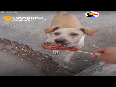 dog-food-secrets-review-2017stray-dog-in-bangkok