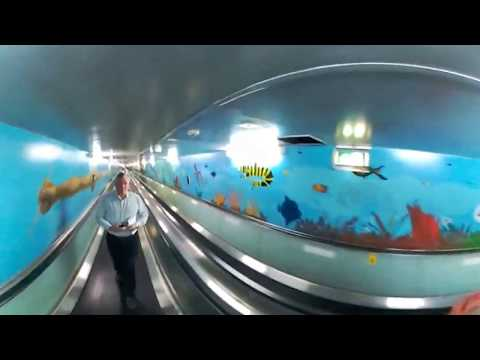 Murals in Express Walkway, from Hyde Park to Domain Car park in 360 Degree, Sydney, Australia