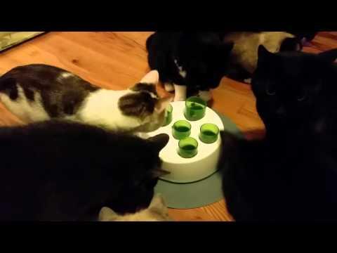 Catit Senses 2.0 Digger Cat Treat Toy