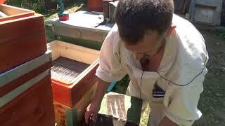 Еще один способ объединения пчел -ЧЕРЕЗ РЕШЕТО